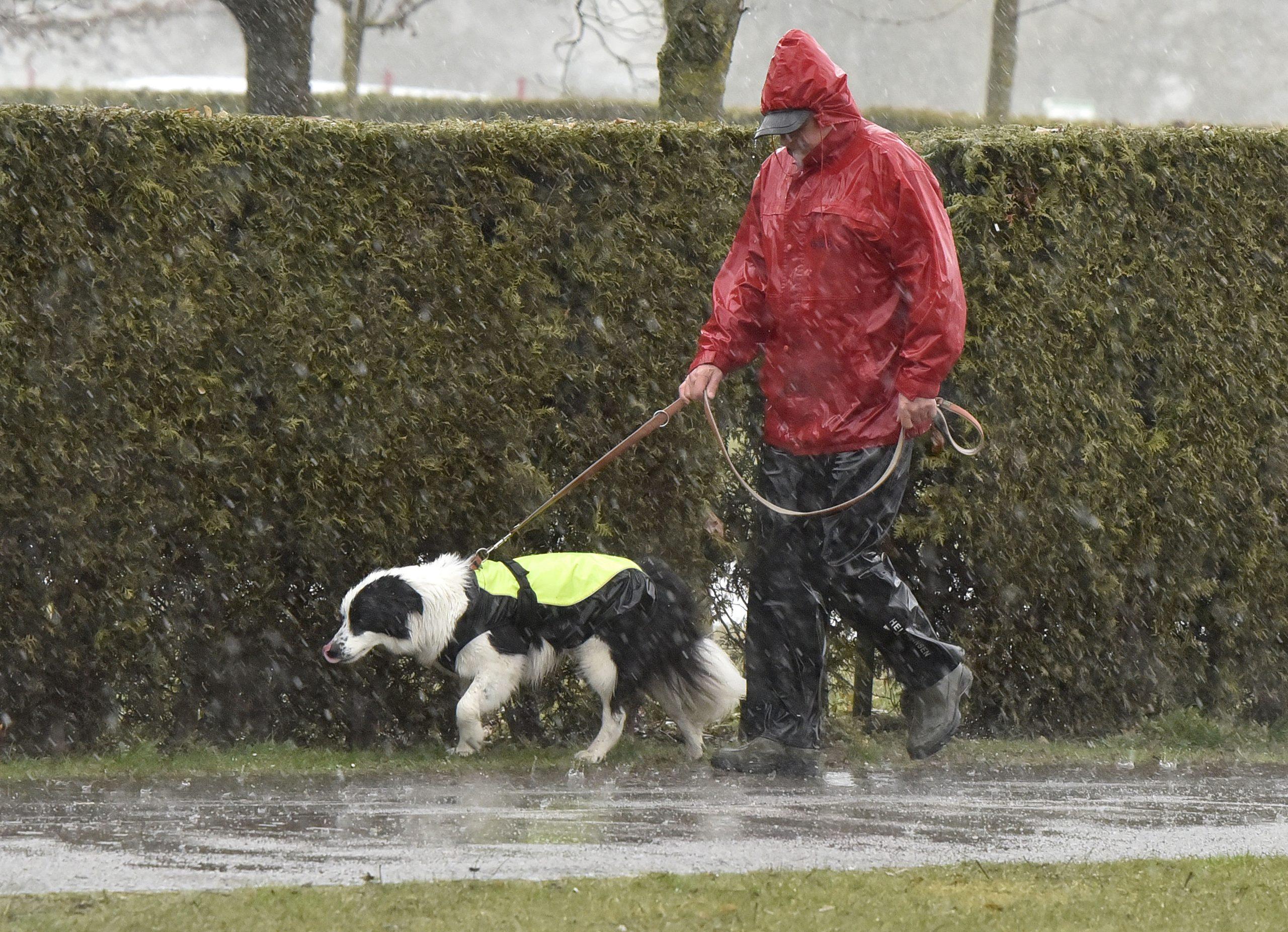 Sprehod s psom po dežju