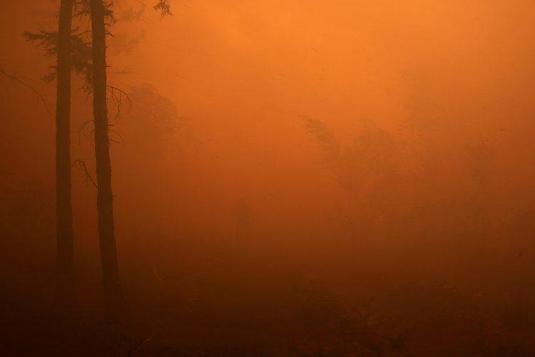 Gozdni požari v Sibiriji