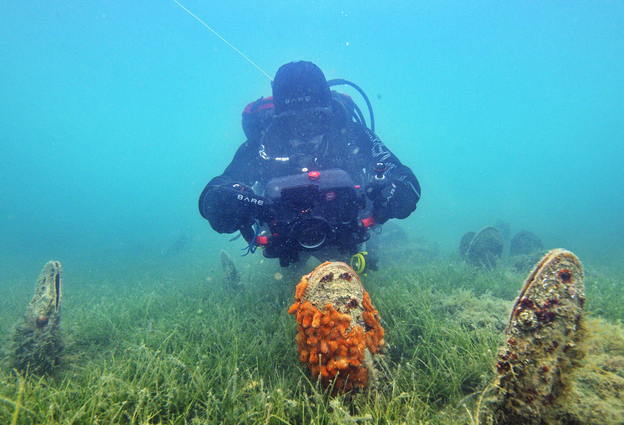 Slovensko morje praktično nima več leščurjev
