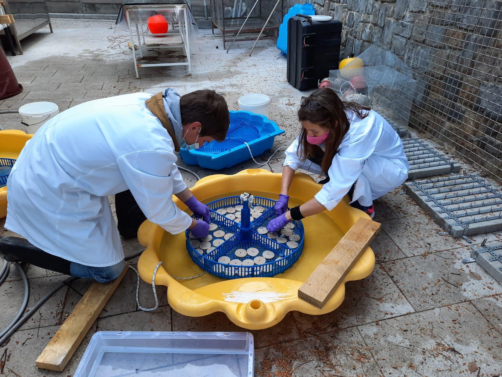 Raziskovalci bodo steljke alg nesli v morje