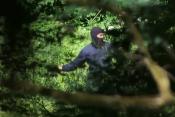 Policist na meji Hrvaška-BiH