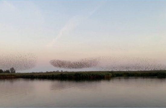 Jata ptic