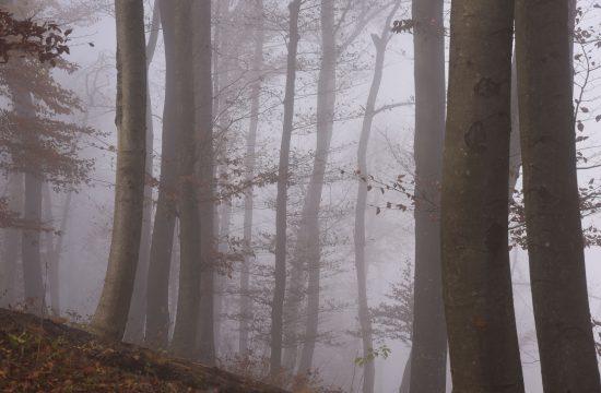 Megla, jesen, narava, gozd, vreme